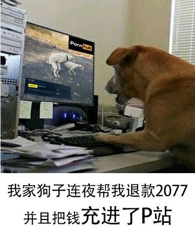 国际资讯_狗都不玩搞笑表情包 狗都不玩原神 狗都不玩2077_游戏369